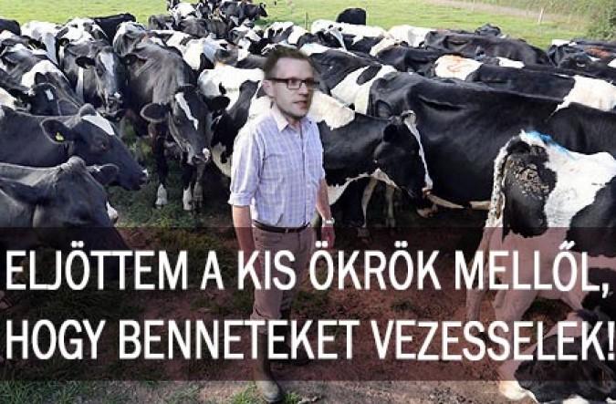 bovine00