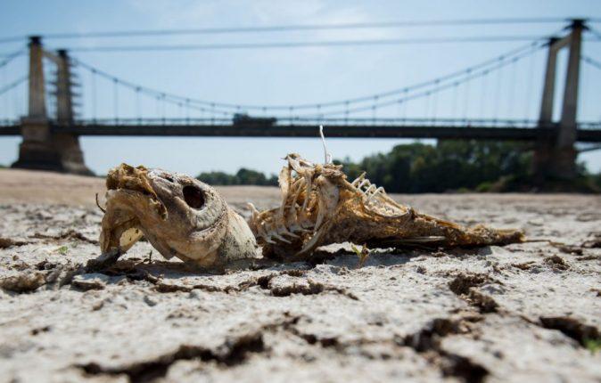 hot-drought-climate-change-heatwave-france